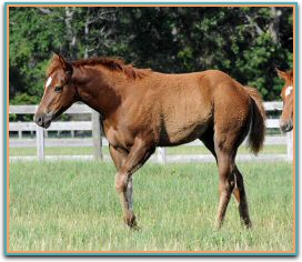 Passion Rules filly3913.jpg