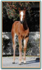 Heza Stemwinder x Ashleys Halo ET filly6566.jpg