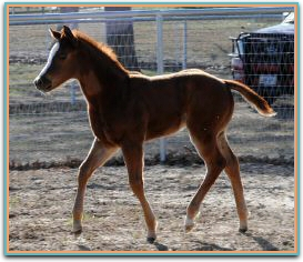 Shoultz filly 3-5-2013 7722.jpg