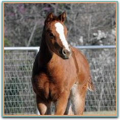 Shoultz filly 3-5-2013 7775.jpg