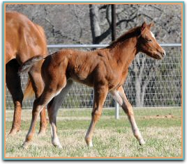 Prada filly 3-12-2013 8361.jpg