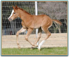 Kallista 2014 Filly 1580.jpg