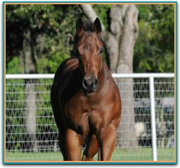 stem x ashley halo colt2798.jpg